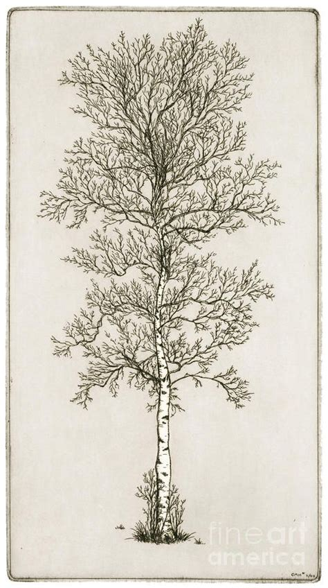 birch tree tattoo birch tree drawings of trees be cool and