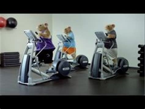 2014 Kia Soul Hamster Commercial 1000 Images About Car Photos On