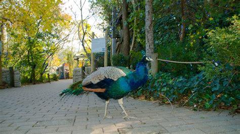 Cincinnati Zoo Botanical Garden Cincinnati Oh Cincinnati Zoo And Botanical Garden In Cincinnati Ohio Expedia Ca