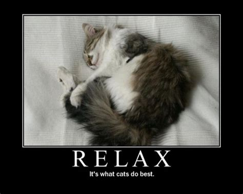 Relaxing Memes - funny animals relaxing memes