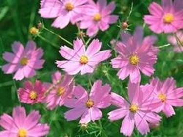 fiori da bordura pieno sole aiuola pieno sole domande e risposte giardino