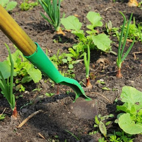 how to get rid of weeds in flower beds how to get rid of weeds from the flower beds