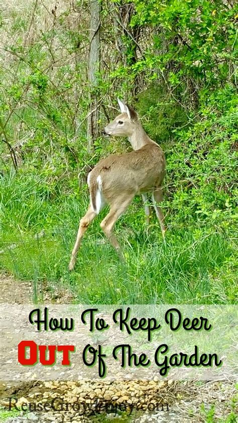 85 How To Keep Deer Out Of Garden It Expands For How To Keep Deer Out Of Vegetable Garden