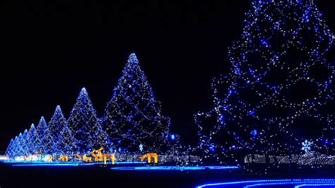 christmas tree night light christmas photos full of light and joy from enigmatic japan
