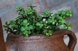 Flowering Shrubs For Afternoon Sun - succulent plants foolproof quot gardening quot amanda jane brown