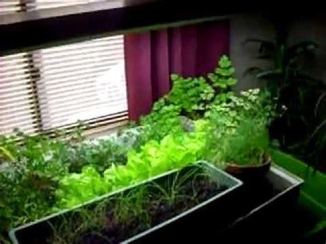 indoor aquaponics garden  food youtube