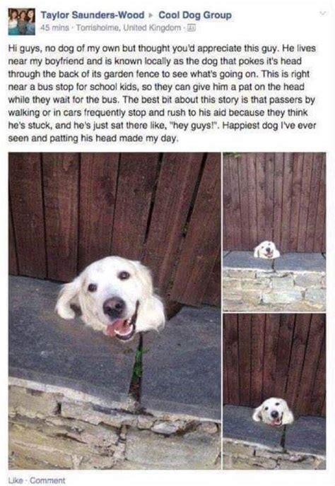 Cool Dog Meme - the best epic memes memedroid