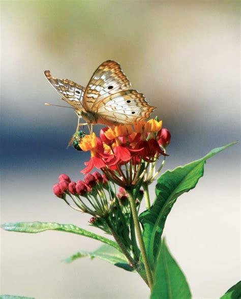 plants  backyard pollinators organic gardening