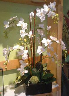 Läuse An Orchideen 3834 by 1000 Ideas About Orchid Arrangements On