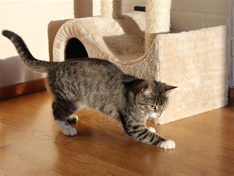 updated   cat scratch posts   cats