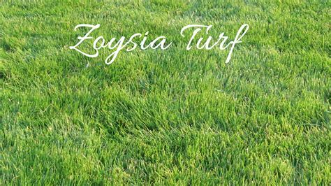 zoysia vs bermuda types of turf grass 28 images the complete beginner