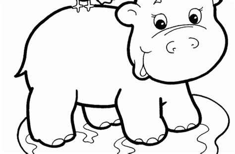 cute baby hippo coloring pages images pictures becuo