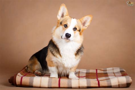 Top Tips for Dogs That Live in Apartments   Pets4Homes