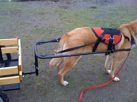 dog house carts 17 best images about trailers carts and harness on