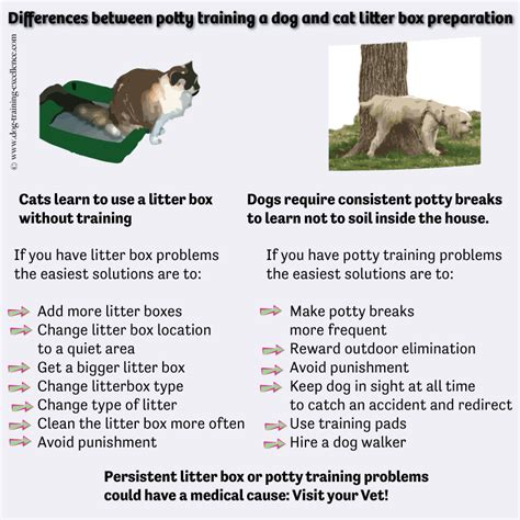 difference between cats and dogs difference between dogs and cats that can help in a multi species household