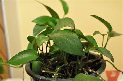 come curare le piante d appartamento come curare le piante d appartamento in inverno