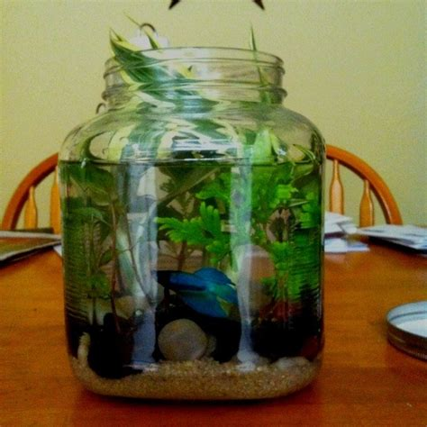 backyard aquarium awesome aquarium and fish pond ideas for your backyard the owner builder network