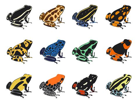 Tiny Color by How Deadly Are Poison Dart Frogs Wonderopolis