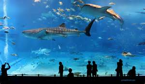 kuroshio sea 2nd largest aquarium tank in the world photo page everystockphoto