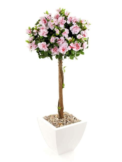 Beautiful Indoor Plants azaleas are idea a fitting decoration for your home