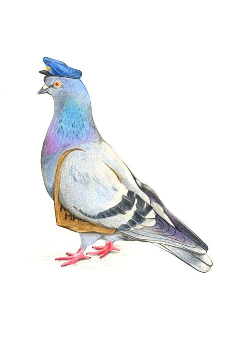 68 best images about carrier pigeons on pinterest means