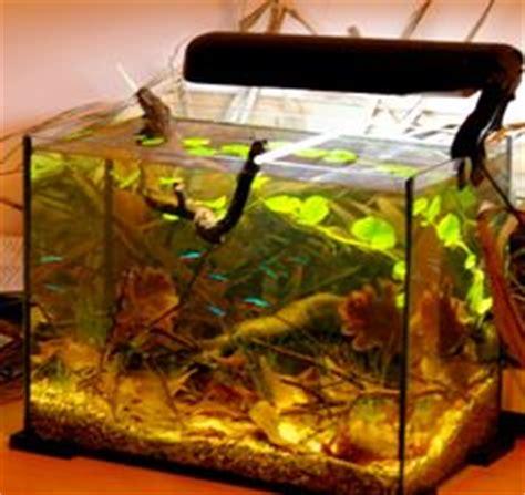 aquarium design in bangladesh 1000 images about biotope aquariums on pinterest