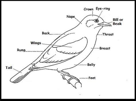 l o s young birders club