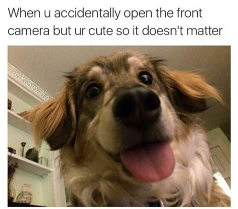 Dog Laughing Meme - best 25 cute dog memes ideas on pinterest smiling dog