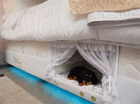 Sleeping On Mattress Without Box by Box Pet Beds Bed Design