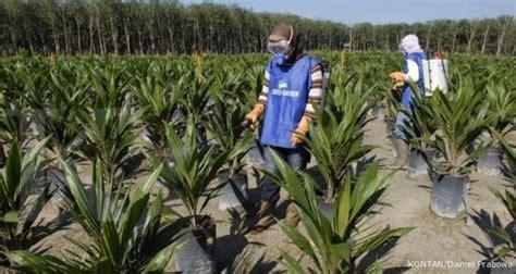 Prediksi Minyak Kelapa Sawit 4 replanting sudah di verifikasi informasi komoditi