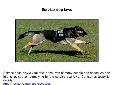 service dogs in laws service laws authorstream
