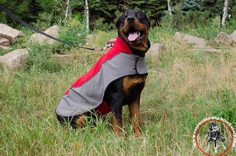 rottweiler coat rottweiler coat length dogs in our photo