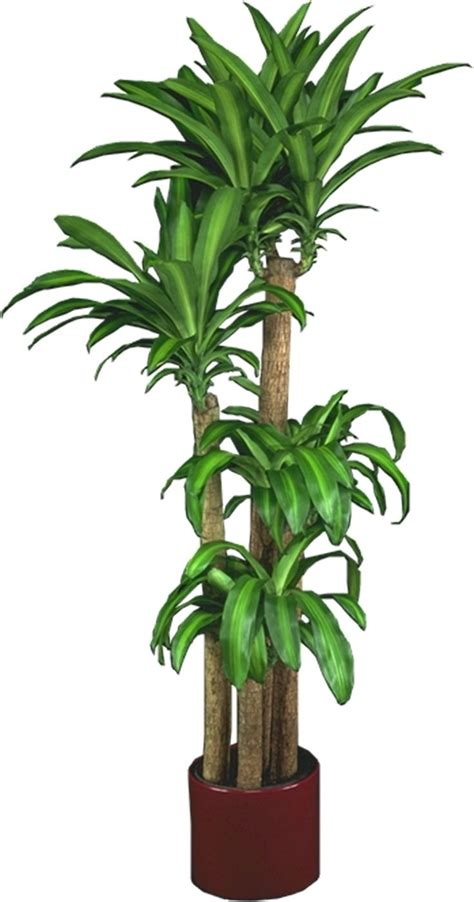 good plants for low light home design indoor plants low light common houseplants