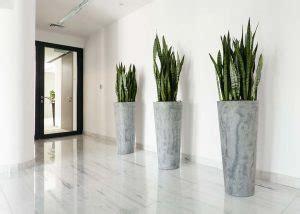 vasi grandi per piante come scegliere i vasi per piante officina verde verona