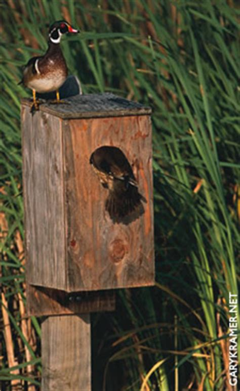 build wood duck boxes easy  follow   build