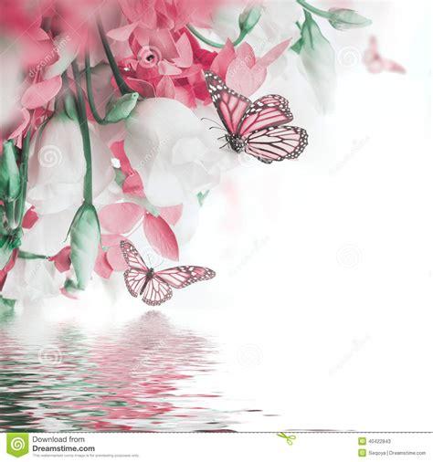 imagenes de rosas y mariposas bellas ramo de rosas blancas y rosadas mariposa foto de archivo