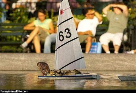 duck boat acronym funny nautical terms xs sailing