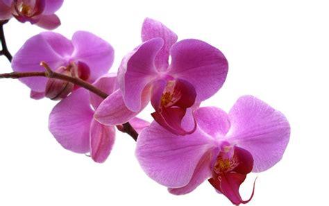 Orchid Care   Briggs Garden & Home