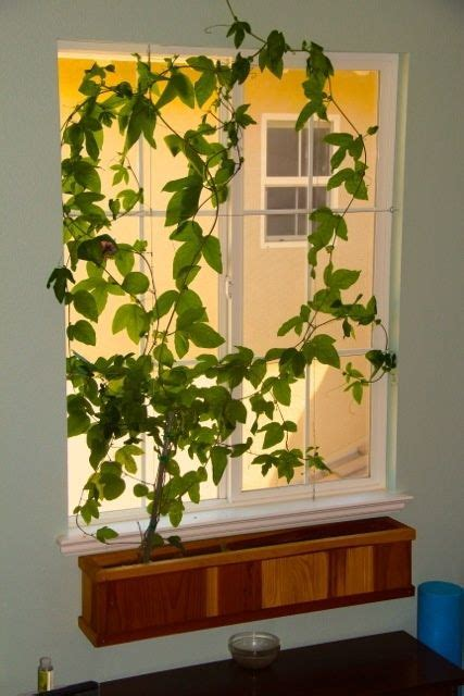indoor window planter best 20 indoor window boxes ideas on pinterest
