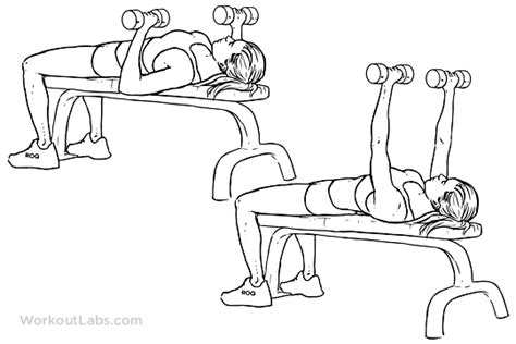 dumb bell bench dumbbell flat bench press illustrated exercise guide workoutlabs