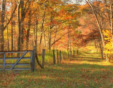 in fall fall in western maryland photograph by neal blizzard