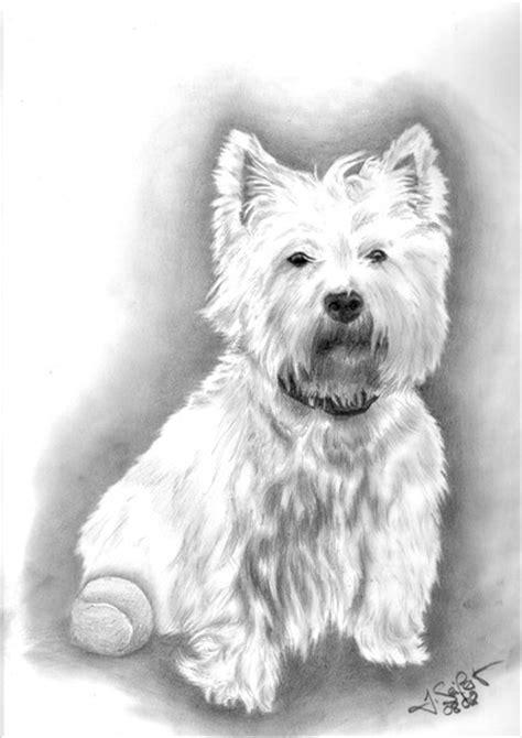 Bild: Westhighland, Terrier, Westi, Hund von Jessica ...