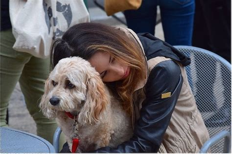 how to an emotional support how to get an emotional support animal