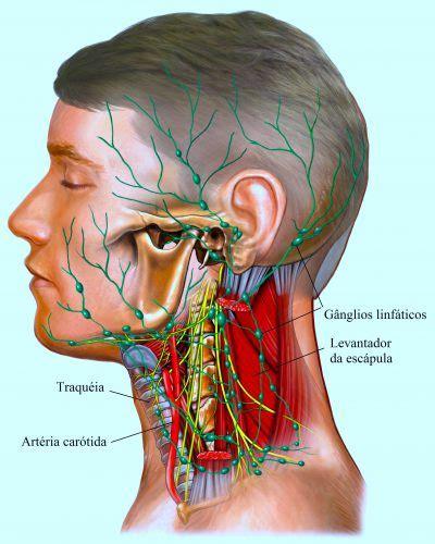 gengiva interna gonfia causas de linfonodos