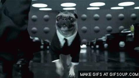 frank the pug in black five things five favorite aliens keysmash