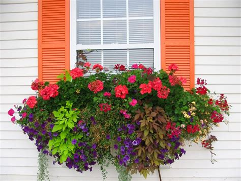 Best Window For Plants How To Plant A Rockin Window Box The Impatient Gardener