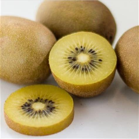Benih Buah Kiwi bibit kiwi golden bibitbunga
