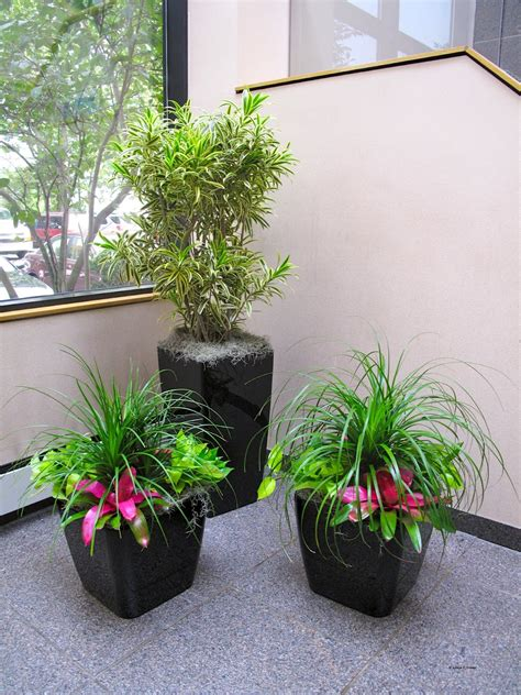 apartment plants ideas how to properly install interior house plants plants