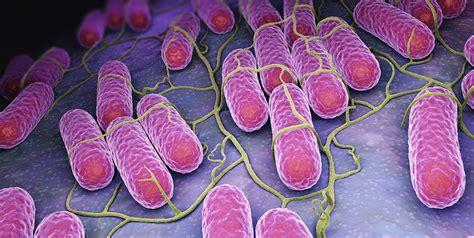 vene varicose alimentazione trattamento vene varicose rimedi naturali per vene