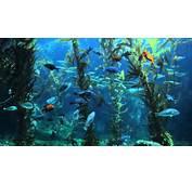 3 HOURS Of Relaxing Aquarium Fish Coral Reef Tank